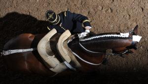 Sauteur en liberté - Cadre noir de Saumur – © Alain Laurioux