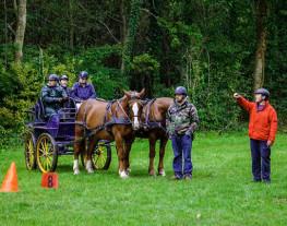 S'initier à l'attelage à 1 cheval