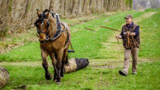 Etes-vous prêt à soutenir l'utilisation du cheval attelé ?