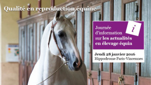 Journée de l'élevage 2015 cheval
