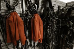 marque Haras nationaux, veste rouge et harnais
