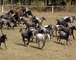 Délais SIRE - chevaux au galop