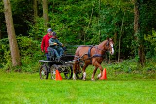 cheval attelé entre les cônes