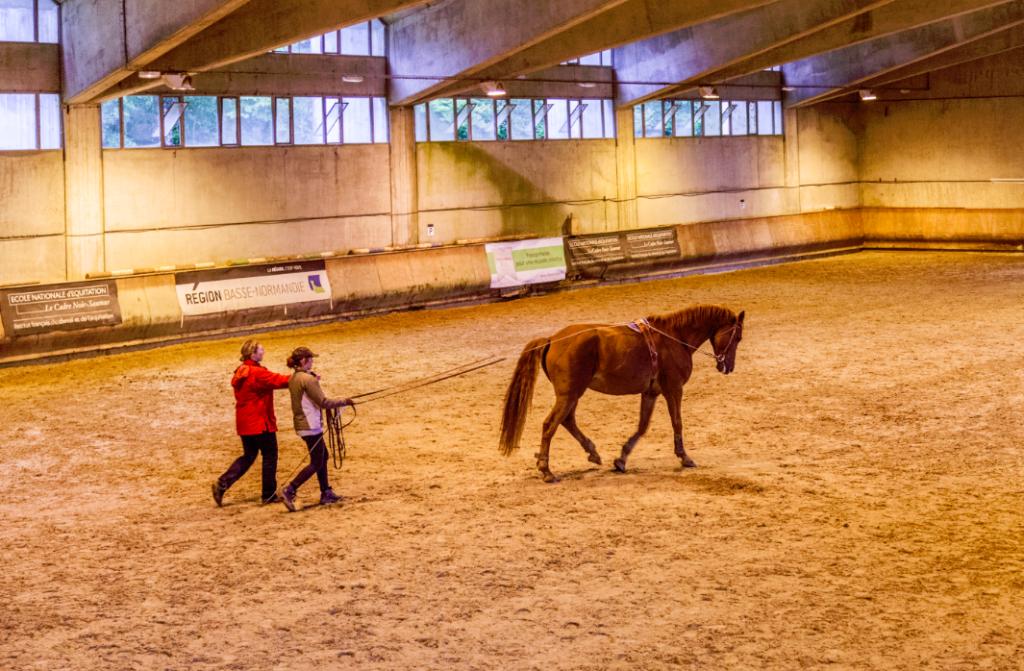 propose cheval a monter auvergne
