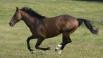 cheval dans pré