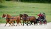 attelage à 4 chevaux