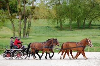 attelage à 4 chevaux en carrière