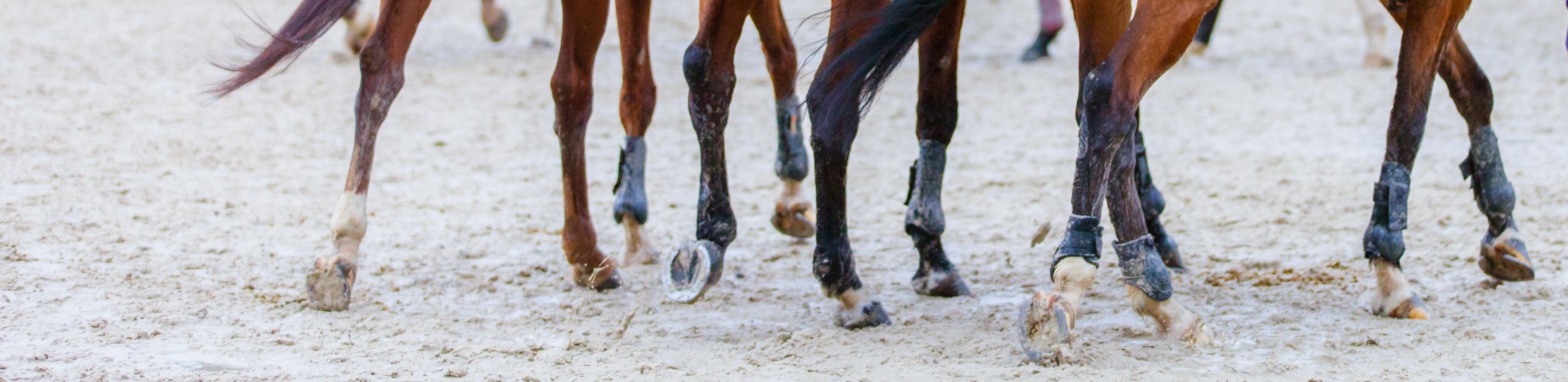 DIFF-membres-chevaux-B