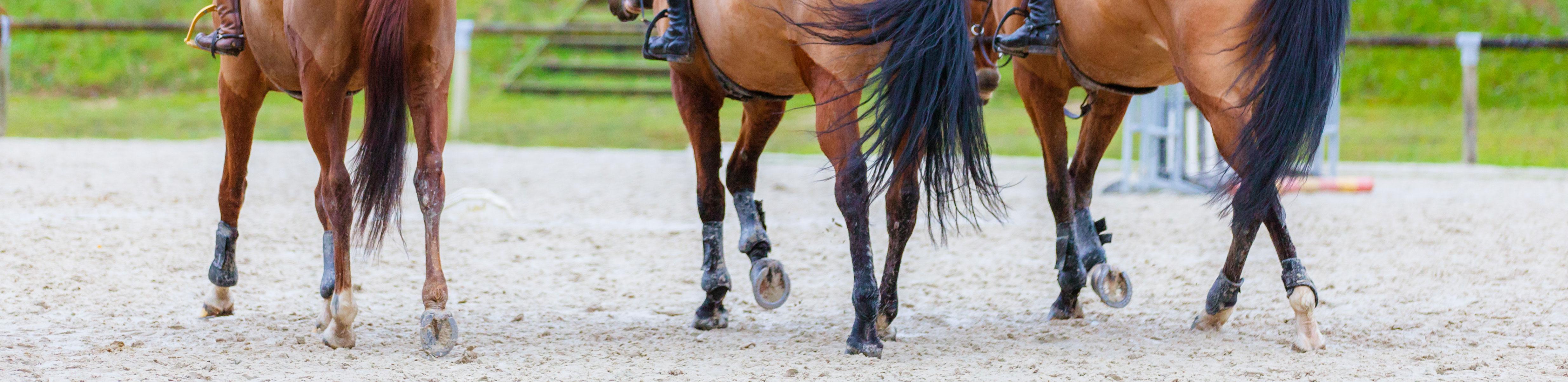 DIFF-membres-chevaux2-B