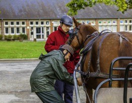 garnir cheval attelage