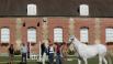 caractérisation cheval présentation