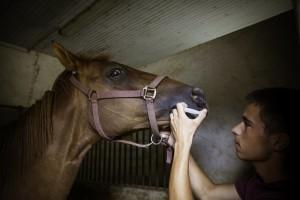 soins cheval seringue