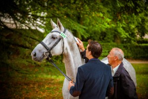 SIRE-lecture-puce-cheval
