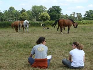Observation troupeau dans pré