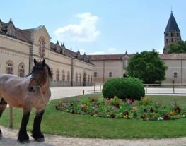 Cheval de trait auxois devant les bâtiments du Haras national de Cluny