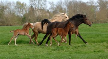 Tendances filière cheval, note de conjoncture début 2015
