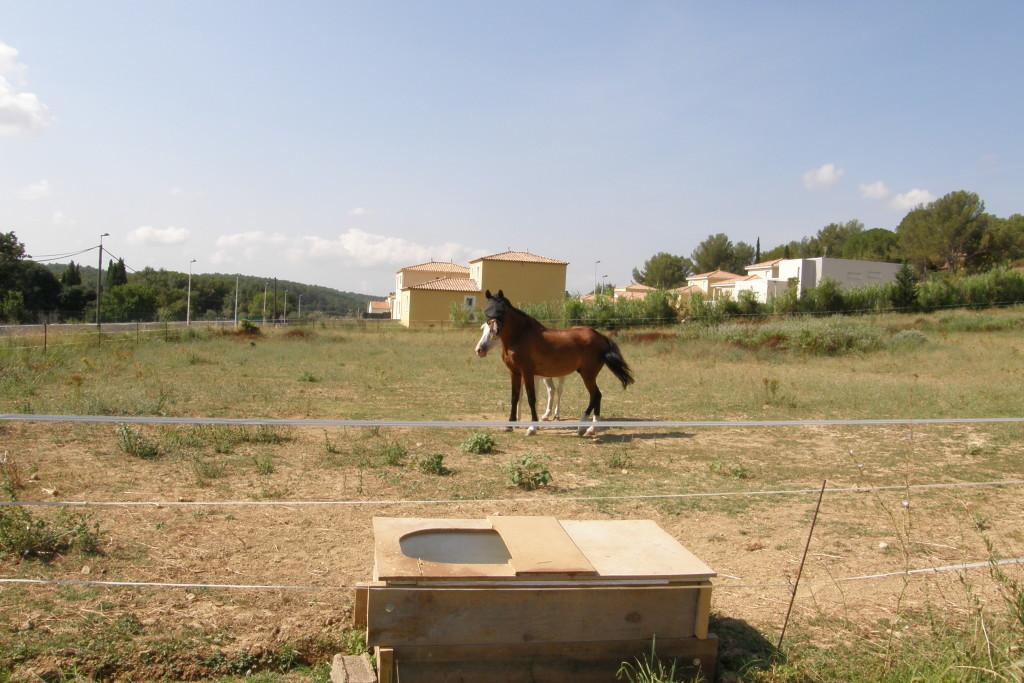 Exemple d'utilisation d'espaces de statut transitoire (plus agricole et pas encore constructibles) par des équidés de particuliers indépendants en zone périurbaine. (c) Ifce