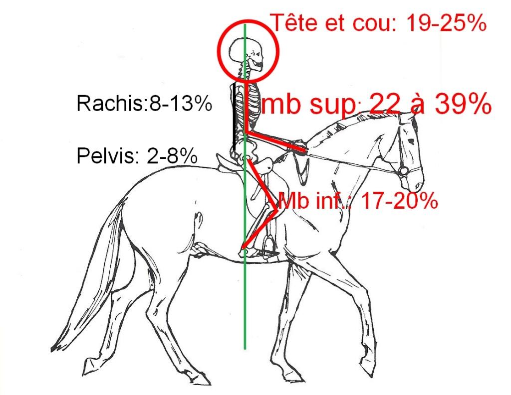 Répartition des lésions chez le cavalier