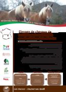 Elevage de chevaux de trait Comtois spécialisé en circuit de vente directe