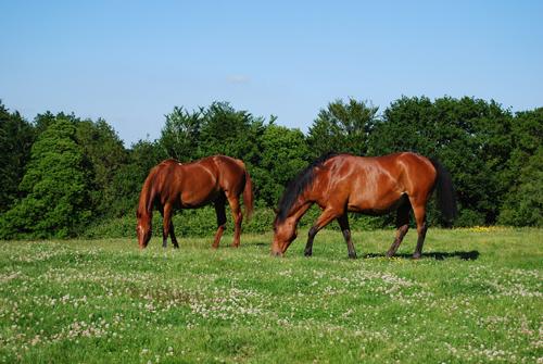 aide filière cheval, bien être animal