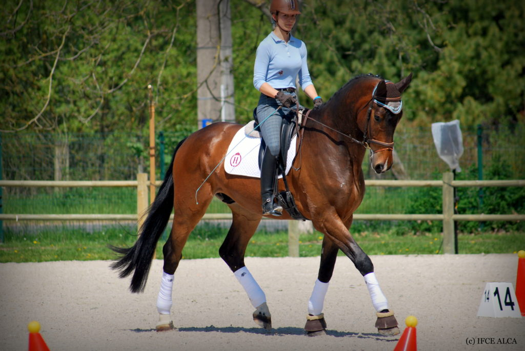 photo cheval dressage