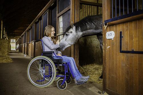 cheval médiateur
