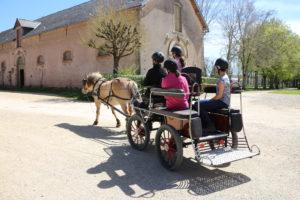 Stage Attelage Adolescents Haras national de Rodez Avril 2016