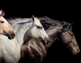 médiathèque cheval
