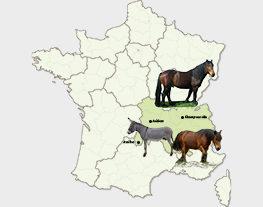 IFCE-auvergne-RH