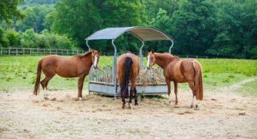 3 chevaux au pré