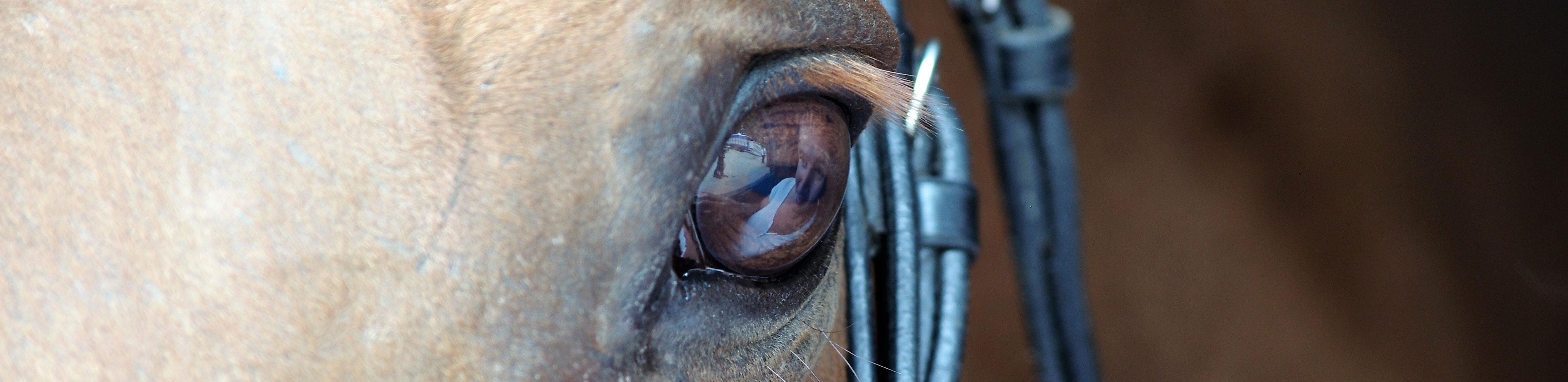 SIRE-Oeil-cheval-M.DHOLLANDE-(2)