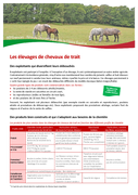 Entreprises de la filière équine : les élevages de chevaux de trait