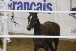 Elevage France Dressage web