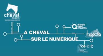 Haras national du lion d 39 angers for Salon du cheval angers 2017