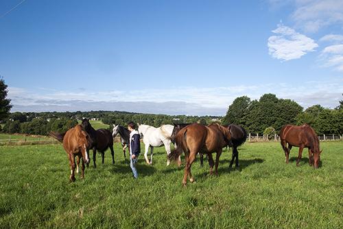 Troupeau de chevaux / L.Gerard - Ifce