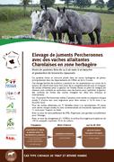 Elevage de juments Percheronnes avec des vaches allaitantes Charolaises en zone herbagère
