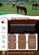 Elevage mixte de juments Comtoises et vaches allaitantes Blondes d