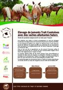 Elevage de juments trait Comtoises avec des vaches allaitantes Salers