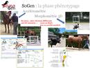 La phase phénotypage du projet SoGen