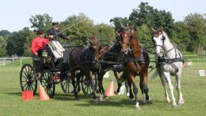 lb-concours-national-dattelage-saint-lo-une-preparation-pour-les-jeux-equestres-mondiaux