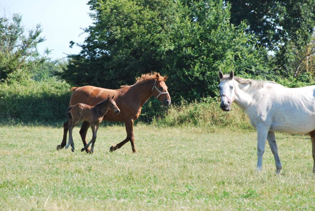 Alim- chevaux au pre