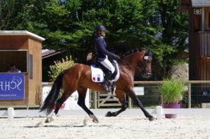 DIR-poney-dressage