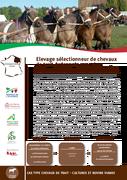 Elevage sélectionneur de chevaux de trait Ardennais avec des cultures et des vaches allaitantes