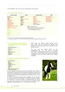 Ecus 2018 - Elevage et production - Races de selle, poney, territoire