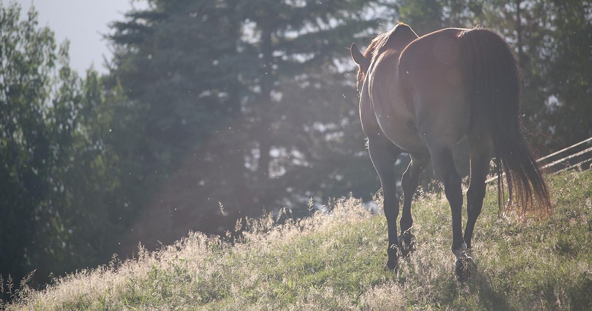Idées reçues sur les chevaux sauvages