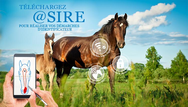 Webconférence @SIRE - L'institut français du cheval et de l'équitation