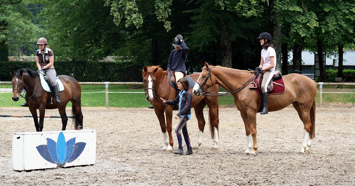Le bien-être animal en poney-clubs et centres équestres