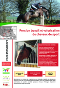 Pension travail et valorisation de chevaux de sport