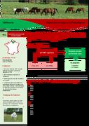 Une petite structure d'élevage Connemara, optimisée et à temps partiel