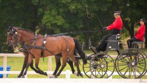 Raphaël Berrard au trot avec ses chevaux au concours international d'attelage du Pin